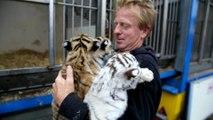 Trois tres jeunes tigres a voir au cirque de...