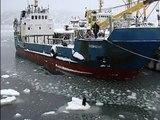 Russische Seefahrer sehen einen Hund, der auf einem Eisberg gestrandet ist - und ihr Rettungs-Plan ist verückt