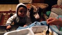 Tu veux que bébé parle et finalement c'est ton chien qui sort ses premiers mots