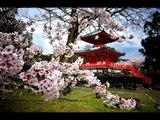 Japanese Instrumental Music Traditional | Relaxing Japanese Music - Japan Anime Music