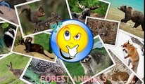 Animals for Kids   Forest Animals for Kids   Learn Animals   Animals in English