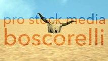 Bull Skull in Desert Global Warming Poaching Concept 3D Animation 1