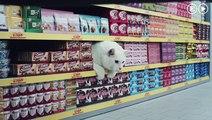 El anuncio que reúne a los gatos más famosos arrasa en la Red  Vídeos  EL PAÍS