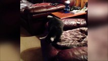 Quand t'essaies de te caler dans le canapé... Coincé!