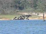 Rästeltier Februar 2010 am Peryjar Stausee Südindien-DFH_4l3Bmkc