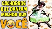 Dog Dance - Cachorros Dançando