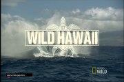 cap1 Hawaii salvage