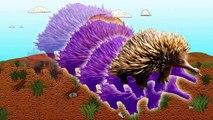 Animal Videos for Kids! Animal Names for Children! Australian Animals! Learn Animal Names!