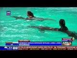 Serunya Libur Lebaran dengan Berenang Bareng Lumba-Lumba