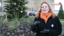 Versailles : les conseils pour imiter  la ville pionnière du Zéro Phyto