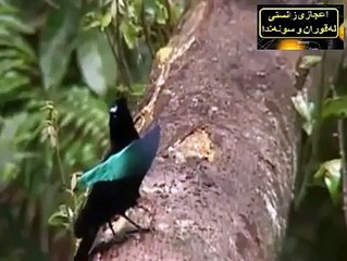 SubhanAllah Most Beautiful Birds on the Planet