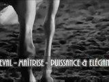 BEAUTIFUL HORSE - MAÎTRISE - PUISSANCE & ÉLÉGANCE