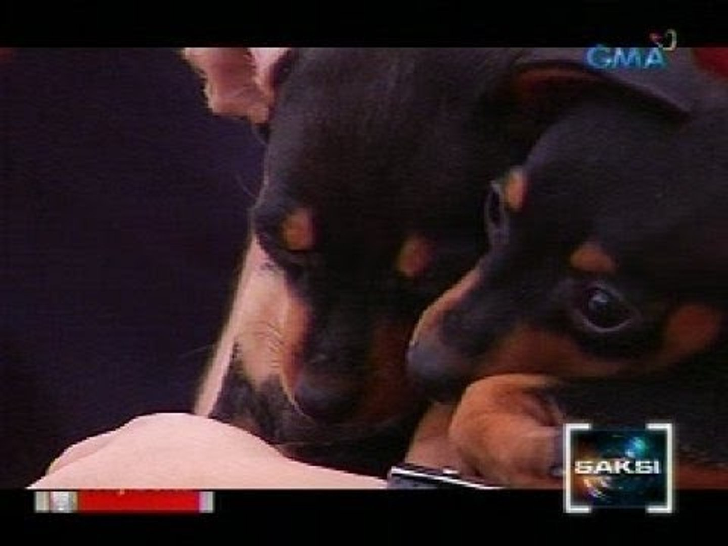 Saksi: Pet dogs at maging owners, pwedeng mag-bonding sa tulong ng online pet dating services