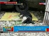 BP: 13 aso sa Brgy. Alitaya, Mangaldan, Pangasinan, namatay dahil sa canine distemper