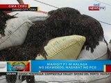 BP: Mahigit P1-M halaga ng seaweeds, nasabat sa Danao City, Cebu