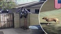 Perampok berhasil mengecoh anjing penjaga dengan makanan anjing - Tomonews