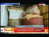 BT: Saku-sakong balintong at iba pang endangered species, nasabat