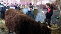 Jugement bétail 2016