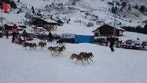 500 chiens de traîneaux participent à une course à travers les Alpes
