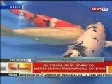 BT: Iba't-ibang uri ng isdang Koi, bumida sa Philippine National Koi Show