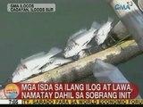 UB: Mga isda sa ilang ilog at lawa sa Ilocos Sur, namatay dahil sa sobrang init
