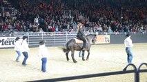 Ce cheval va vous en mettre plein la vue... Il danse avec les cowboys