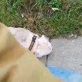 Ce pauvre chien a été abandonné après avoir été piqué par des milliers d'abeilles!