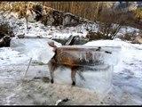 L'incroyable photo d'un renard pris dans la glace ' REPOSE EN PAIX PETIT RENARD ' By Skutnik Michel