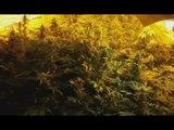 Bovalino (RC) - Scoperta serra di marijuana, arrestato 40enne (17.01.17)