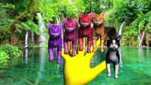 Cat Vs Rat Finger Family Song English Nursery Rhyme | 3D Animation Song For Kids