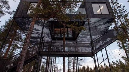 Vacation in Sweden and Sleep in the Trees