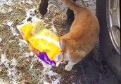 Un chien sauve un chat qui a la tête coincé !