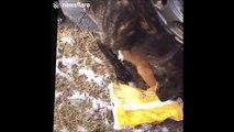 Ce chien aide un chat qui a la tête coincé dans un sac plastique