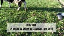 Chez Fine, la vache du Salon de l'agriculture 2017
