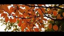 Ile aux cygnes _ Isle of the Swans, Paris France _ Automne _ Fall _ Autumn[2]