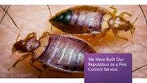 OCP Termite & Pest Control in Pasadena Exterminator