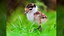 Top des bébés animaux les plus mignons-4wYAKzQNd4E