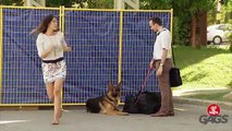 Dog Goes After Hot Dog Man Prank - Just For Laughs Gags