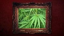Cannabis - illegal aber weitverbreitet! - Die Klugscheisserin-Aq_aG0Un2HQ