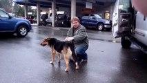 Il libère ce chien enchaîné toute sa vie... Regardez la réaction de l'animal