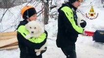 Avalanche en Italie: des chiots retrouvés sous les décombres de l'hôtel