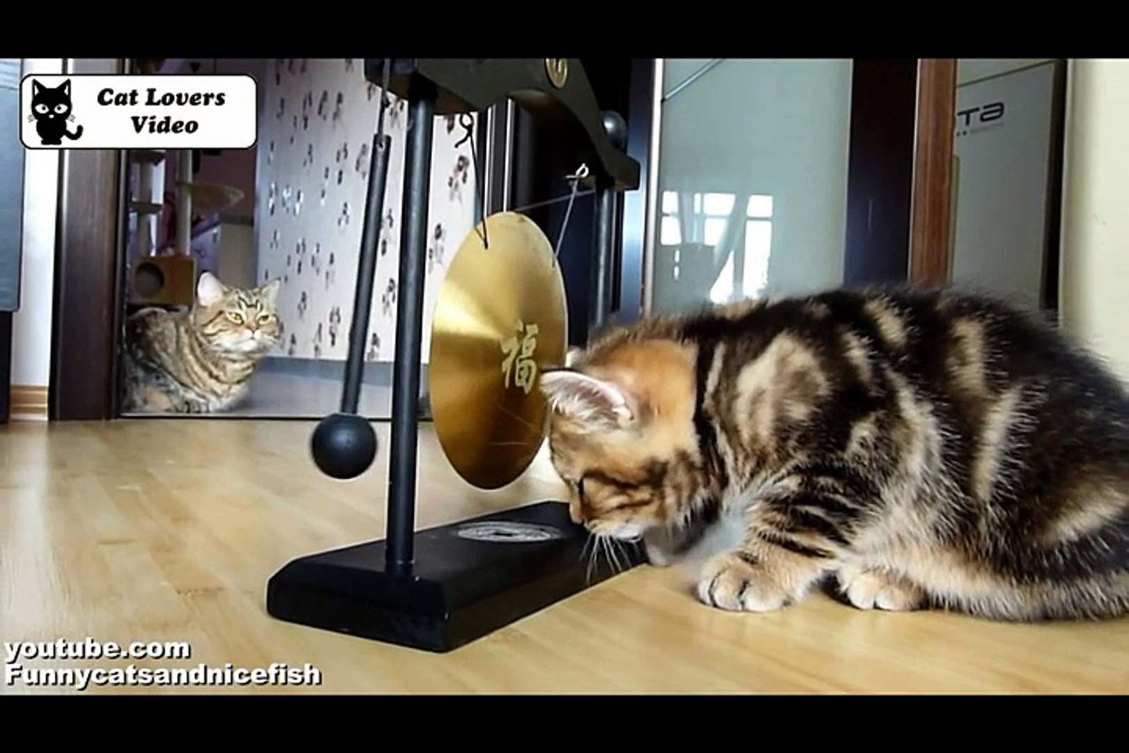 Cute Kittens and gong  Funny Cats musicians