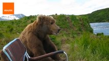 Curious Bear Relaxes With Nervous Camper