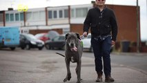 The Heaviest Dog in England Weighs as Much as a Baby Elephant