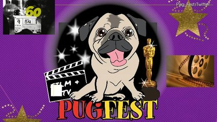 Pug Pups Are Heading To The Pugfest