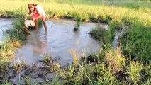 Amazing Fishing at Pailin Province - Cambodia Traditional Fishing - Khmer Net Fishing (Part 224)