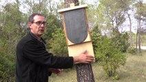 Construire un abri à Pipistrelles (chauves-souris)