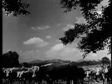 24. Stories Of The Century Tom Horn