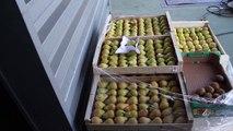 Stop Gaspillage alimentaire Centre Hospitalier de Perpignan ADEME DRAAF OCCITANIE 2016