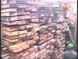 Lutte contre la fraude: plusieurs tonnes de bois sciés clandestinement saisis par la douane